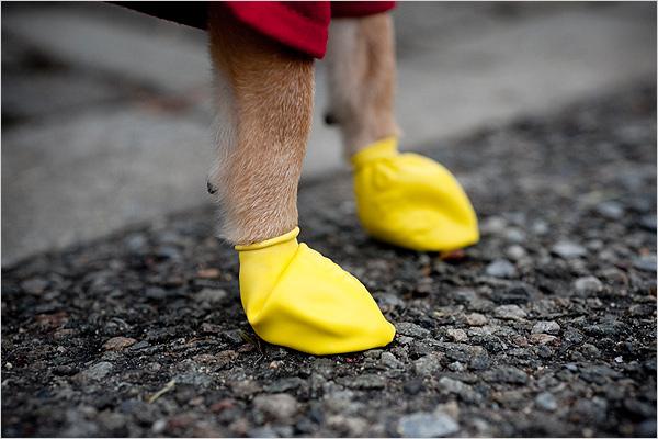 Латексная непромокаемая обувь для собак
