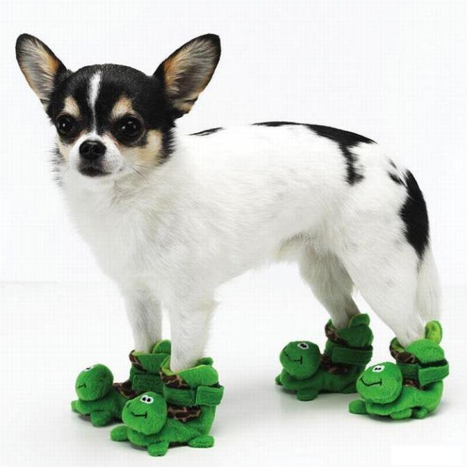 Домашние тапочки для собак миниатюрных пород