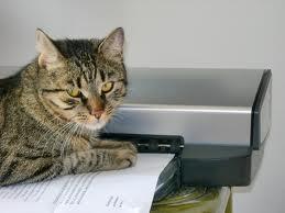 Кот на бумаге